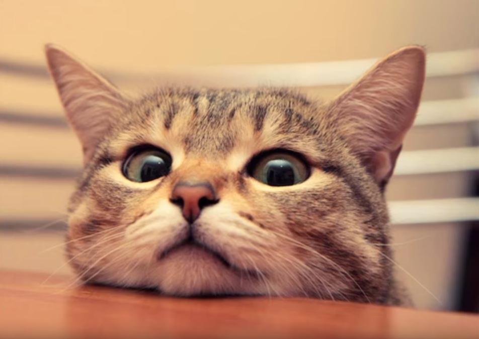 Qui ne s'est jamais senti manipulé par son chat ? A vous, le complot chat