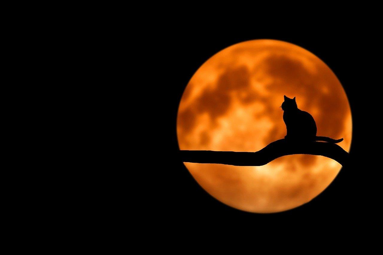 Naissances à la pleine lune